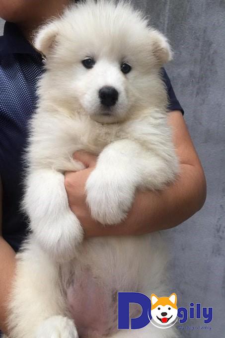 Những lưu ý khi chọn mua chó