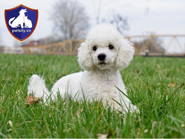 Bạn sẽ được hỗ trợ chi phí khám chữa bệnh, chăm sóc sức khỏe trọn đời đối với thú cưng mua tại hệ thống Petsily Shop