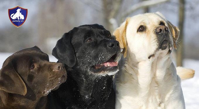 Các chú chó có đủ màu lông để lựa chọn