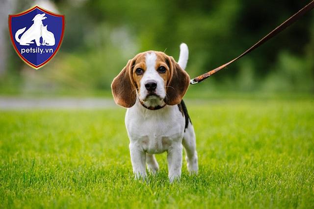 Cần lưu ý gì khi mua cún cưng?