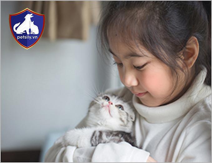 Mèo tai cụp rất tình cảm, ngọt ngào và luôn muốn chơi đùa với trẻ nhỏ