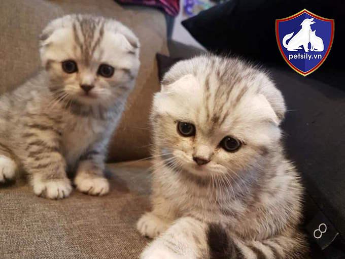 Nên lựa chọn những bé mèo trên 2 tháng, có sức khỏe tốt và năng động