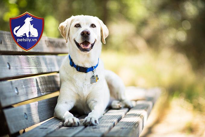 Nhận ưu đãi đặc biệt khi mua chó tại Petsily