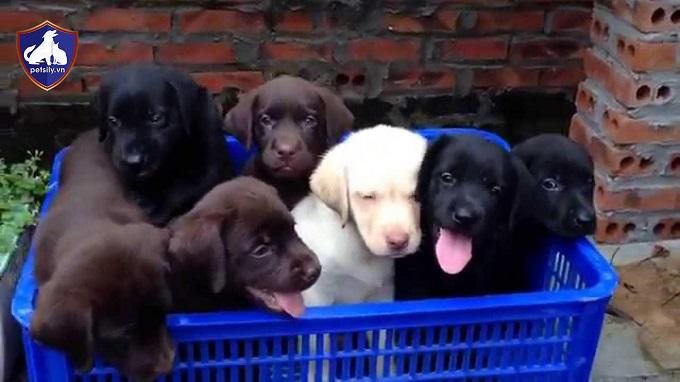 Những chú chó con đáng yêu